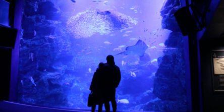 """冬の京都デートに。""""恋""""にあふれる京都水族館の「ふゆ恋すいぞくかん」"""