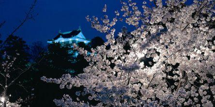 中部・東海のお花見・桜名所ランキング(2021)人気の夜桜や桜祭りも!