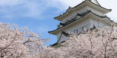 関東のお花見・桜名所ランキング(2021)人気の夜桜や桜祭りも!