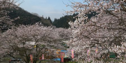 大分県のお花見・桜の名所(2021)夜桜・ライトアップや桜祭りも