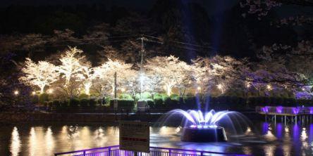福岡県のお花見・桜の名所(2021)夜桜・ライトアップや桜祭りも