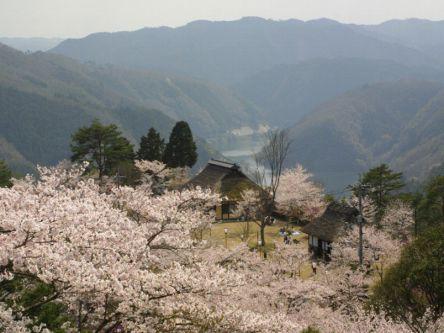 岡山県のお花見・桜の名所(2021)夜桜・ライトアップや桜祭りも