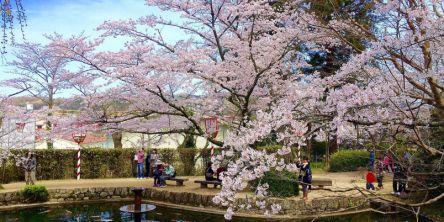 鳥取県のお花見・桜の名所(2021)夜桜・ライトアップや桜祭りも
