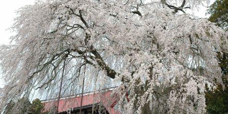 兵庫県のお花見・桜の名所(2021)夜桜・ライトアップや桜祭りも