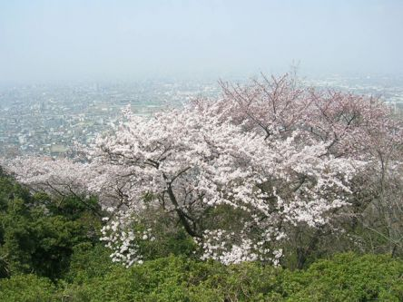 大阪府のお花見・桜の名所(2021)夜桜・ライトアップや桜祭りも