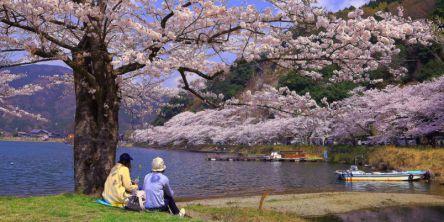 滋賀県のお花見・桜の名所(2021)夜桜・ライトアップや桜祭りも