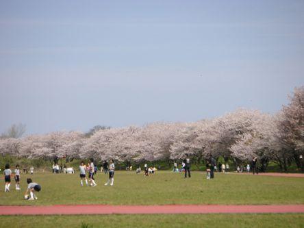三重県のお花見・桜の名所(2021)夜桜・ライトアップや桜祭りも