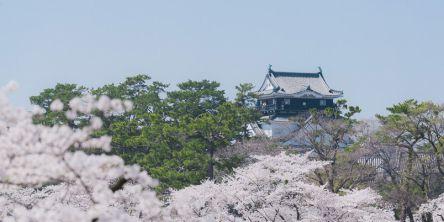 愛知県のお花見・桜の名所(2021)夜桜・ライトアップや桜祭りも