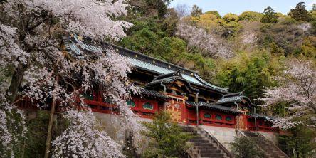 静岡県のお花見・桜の名所(2021)夜桜・ライトアップや桜祭りも