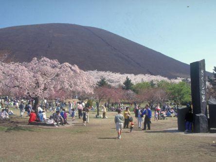伊豆・熱海のお花見・桜の名所(2021)夜桜・ライトアップや桜祭りも
