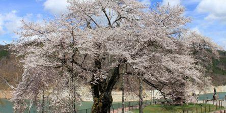 飛騨・高山周辺のお花見・桜の名所(2021)夜桜・ライトアップも