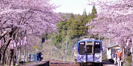 石川県のお花見・桜の名所(2021)夜桜・ライトアップや桜祭りも