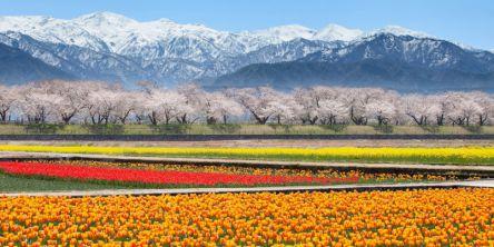 富山県のお花見・桜の名所(2021)夜桜・ライトアップや桜祭りも