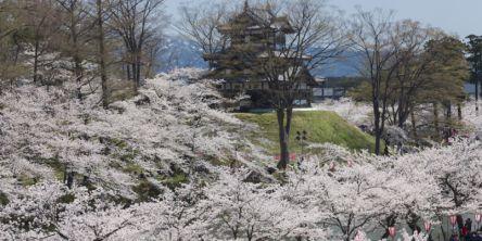 新潟県のお花見・桜の名所(2021)夜桜・ライトアップや桜祭りも