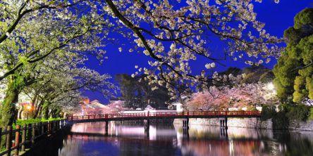 神奈川県のお花見・桜の名所(2021)夜桜・ライトアップや桜祭りも