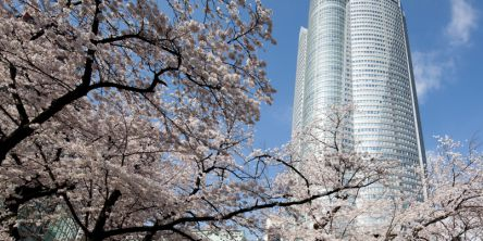 東京都のお花見・桜の名所(2021)夜桜・ライトアップや桜祭りも