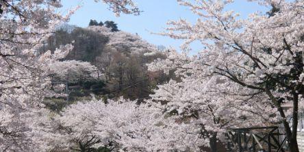群馬県のお花見・桜の名所(2021)夜桜・ライトアップや桜祭りも