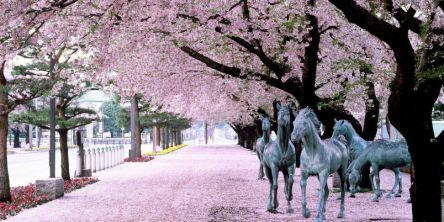青森県のお花見・桜の名所(2021)夜桜・ライトアップや桜祭りも