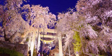 全国の夜桜ライトアップの名所(2021)お花見デートにおすすめ!