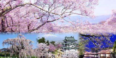 全国のお花見・桜名所(2021)夜桜ライトアップや桜祭りも満載!