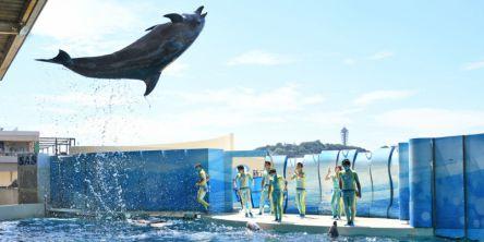"""【チケット割引あり!】新江ノ島水族館(えのすい)の""""春のイベント""""を120%楽しむには?"""