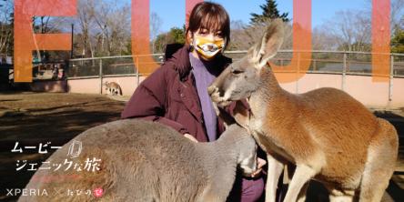 【たびのび】大迫力の動物に感動!自然の魅力を満喫する富士サファリパークの旅