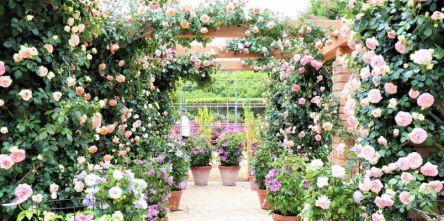 あしかがフラワーパークで500種2500株のバラが見頃!「Rose Garden~春のバラまつり~」開催
