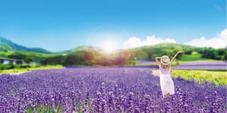 関東最大級の花絶景!5万株のラベンダーが咲き誇る「たんばらラベンダーパーク」7月10日(土)より営業開始