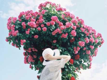 初夏の新緑とカラフルな花で季節を感じましょう【Masa の関西カメラさんぽ2】
