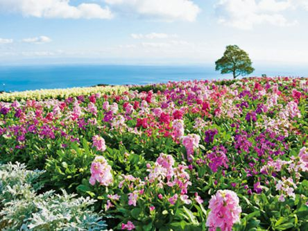 花の島・淡路島のフォトジェニックスポットめぐり!花景色を満喫するおすすめコース