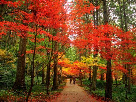 静岡県でおすすめの紅葉名所~見頃やライトアップなどの2020年情報~