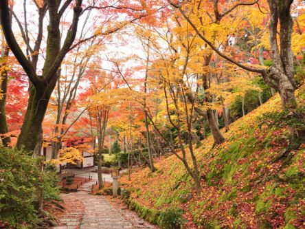 京都「嵐山・嵯峨野・高雄」のおすすめ紅葉名所2020