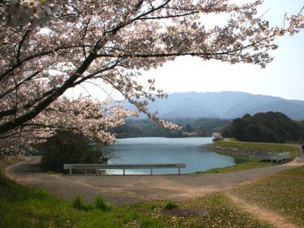 香川県のお花見・桜の名所(2021)夜桜・ライトアップや桜祭りも