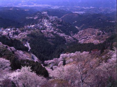 奈良県のお花見・桜の名所(2020)夜桜・ライトアップや桜祭りも