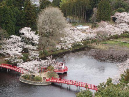千葉県のお花見・桜の名所(2021)夜桜・ライトアップや桜祭りも