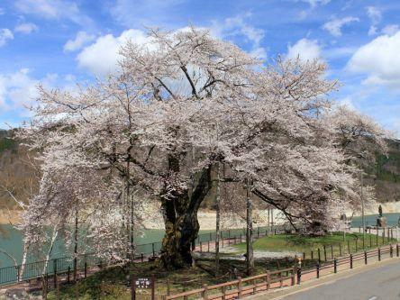飛騨・高山周辺のお花見・桜の名所(2020)夜桜・ライトアップも