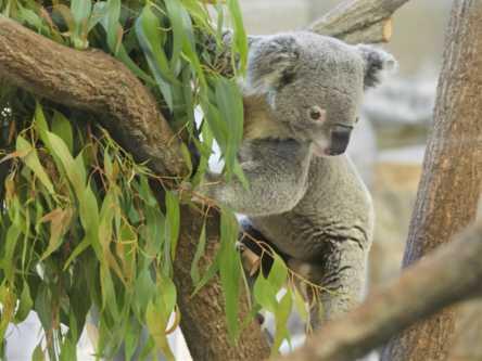 500円で楽しめるアニマル天国「金沢動物園」の愛くるしいコアラが気になる