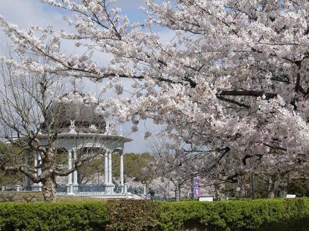 名古屋市内のお花見・桜の名所(2021)夜桜・ライトアップや桜祭りも