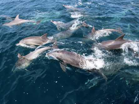 野生のイルカに遭遇!? 九州・天草諸島の美しい海で感動ネイチャープラン