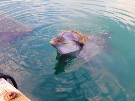 至近距離で見つめ合える!ドルフィンファームしまなみのイルカにメロメロ
