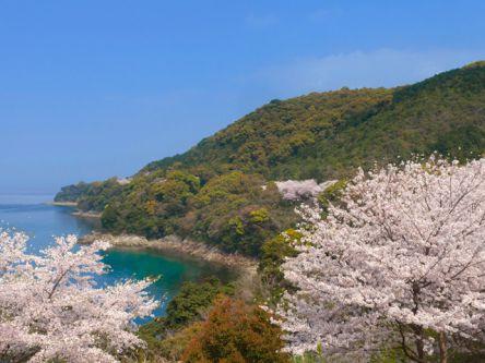 熊本県のお花見・桜の名所(2021)夜桜・ライトアップも満載