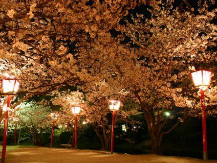九州・沖縄のお花見・桜名所ランキング(2021)人気の夜桜や桜祭りも!
