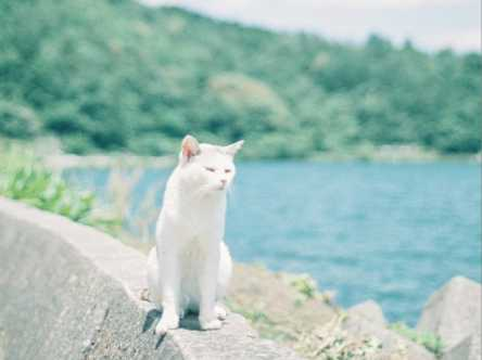 琵琶湖の中の猫の島【Masa の関西カメラさんぽ1】