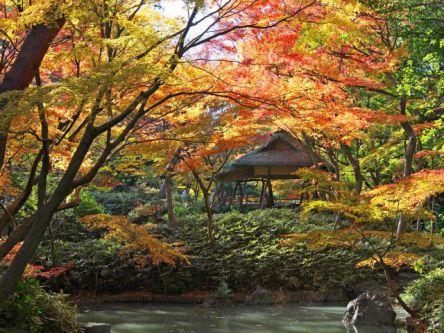 東京都でおすすめの紅葉名所~見頃やライトアップなどの2020年情報~