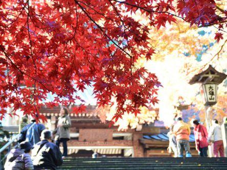 神奈川県でおすすめの紅葉名所~見頃やライトアップなどの2020年情報~