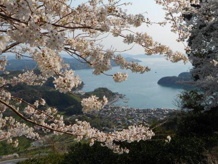 愛媛県のお花見・桜の名所(2020)夜桜・ライトアップや桜祭りも