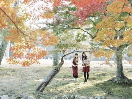 鹿で有名な「奈良公園」は紅葉も見事!【Masaの関西カメラさんぽ12】