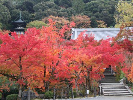 京都「洛東・東山」のおすすめ紅葉名所2020~清水寺・永観堂・南禅寺など~