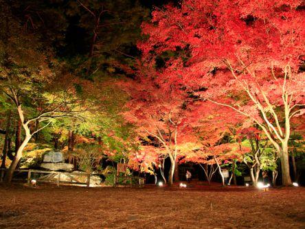 秋のデートにも。関東の紅葉ライトアップがおすすめの名所2020