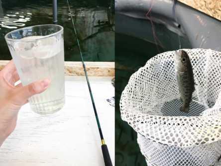 初デートにおすすめの「釣り堀カフェ」とは?釣った魚がすぐ食べられる!?